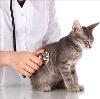 Ветеринарные клиники в Полушкино